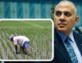 """""""الرى"""" تؤكد حظر زراعة الأرز فى المناطق غير المصرحة.. وغرامة للمخالفين"""