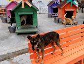 أثريون يسخرون من ارتفاع تكلفة كلاب حراسة المناطق الأثرية