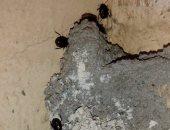 أهالى دمياط الجديدة يشكون انتشار البعوض والحشرات