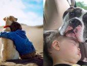 إزاى تربى أولادك بالحيوانات الأليفة؟.. الإخلاص بالكلاب والحنان بالقطط