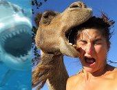 """أخطر 8 صور سيلفى حول العالم .. لن تصدق صورة """"القرش"""""""