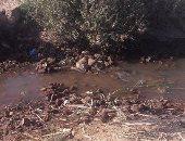 نقص المياه يهدد الأراضى الزراعية بديروط.. والفلاحون يشكون: كارثة للأرض