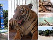 """""""الزراعة"""": فتح المتحف الحيوانى بحديقة الجيزة أمام زوار عيد الفطر"""