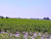 منظومة جديدة لتكويد المزارع.. وقاعدة بيانات للمصدرين لمضاعفة الصادرات