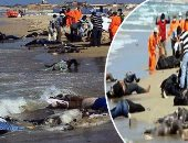 منظمة الهجرة: غرق 41 مهاجرا وفقد 12 قبالة ساحل شبوة جنوب اليمن