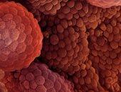 أمل جديد لعلاج السرطان.. علماء بريطانيون يتوصلون لـ27 جينا لوقف تطور المرض