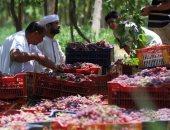 قناة صينية: تصدير 105 آلاف طن عنب مصرى للصين خلال الفترة المقبلة