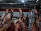 الزراعة: 5 قرارات ساعدت فى النهوض بالإنتاج الحيوانى وزيادة انتاج اللحوم