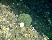 اكتشاف علاج لسرطان البنكرياس والمبيض من إسفنج المحيط الهادى
