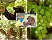 """""""الزراعة"""" تضع روشتة لأشجار الفاكهة متساقطة الأوراق ..تعرف عليها"""