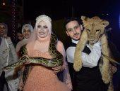 بالصور.. لاعب سيرك يقدم الشبكة لعروسه داخل قفص الأسود ببورسعيد