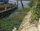 بالصور.. مدينة بنى سويف تبدأ تطهير مجرى نهر النيل