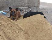 شكوى من انتشار الكلاب الضالة فى شوارع النويرى بمحافظة الفيوم