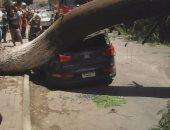 بالصور .. قارئ يرصد سقوط شجرة  ضخمة على سيارة بشارع التحرير