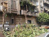 قارئة تشكو قطع الأشجار فى شارع اتحاد المحامين العرب بجاردن سيتى