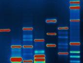 باحثون أمريكيون يكتشفون طريقة لاختراق أجهزة الكمبيوتر باستخدام الـDNA