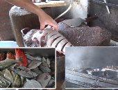 هل تتلائم مشروعات الاستزارع السمكى فى مصر مع التغيرات المناخية ؟