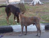 """""""بيطرى أسيوط"""" ينفى ما تناقلته وسائل التواصل بشأن ضبط كلاب مذبوحة"""