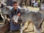 """""""الخدمات البيطرية"""" لجان متابعة بمحال الجزارة لمنع ذبح  البتلو فى العيد"""