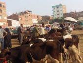 بدء حملة تحصين المواشى ضد الحمى القلاعية والوادى المتصدع بجنوب سيناء