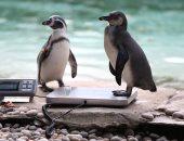 بالصور.. حديقة بريطانية تساعد فى قياس صحة 20 ألف حيوان