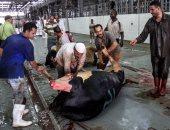 محافظ الجيزة: ذبح 1250 أضحية بالمجازر و35 محضرا لمواطنين ذبحوا الأضاحى بالشوارع