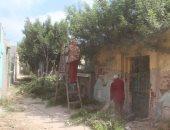 بالصور.. حملة لنظافة المقابر ورفع مخلفات القمامة وتقليم الأشجار بدسوق