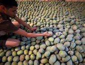 شعبة الخضار والفاكهة: انخفاض أسعار المانجو 30% والكيلو يبدأ بـ5 جنيهات