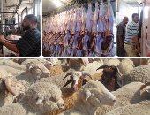 """""""الزراعة"""": وصول 21 ألف رأس ماشية تطرح بالأسواق استعدادًا لعيد الأضحى"""