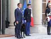 """بالصور.. """"نيمو"""" ليس كلب الإليزيه الأول.. تعرف على كلاب رؤساء فرنسا"""