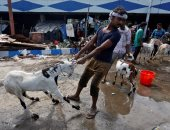 بالصور.. انتعاش تجارة الماعز والمواشى فى الهند وباكستان قبيل عيد الأضحى