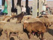 وكالة إسبانية: نفاذ مخزون الجزارات فى إسبانيا بسبب عيد الأضحى