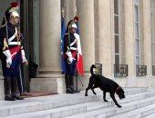 """بالصور..""""كلب ماكرون"""" يتجول فى قصر الإليزيه قبل وصول ضيوف الرئيس الفرنسى"""