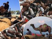 المسلمون فى أنحاء العالم يستعدون لذبح الأضاحى