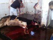 بالصور .. ذبح 120 رأس ماشية في اليوم الأول لعيد الأضحى في 19 مجزراً بكفر الشيخ