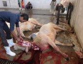 وزارة الزراعة: ذبح أضاحى العيد مجانا فى المجازر على مستوى الجمهورية