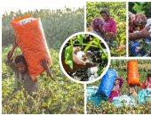 """""""الزراعة"""" توفر بذرة القطن لـ48 ألف فدان.. وحملات لزيادة المساحات"""