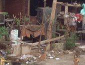 القمامة والكلاب الضالة تحاصر مدينة الفردوس بأكتوبر