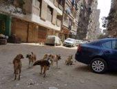 أهالى شارع الزهور بالمرج يستغيثون بسبب انتشار الكلاب الضالة