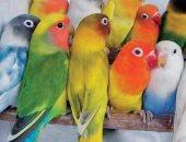الزراعة تحظر استيراد طيور الزينة لمواجهة الأمراض الوبائية.. اعرف التفاصيل