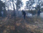 السيطرة على حريق بفدان موالح تابع لمركز البحوث الزراعية بسوهاج
