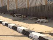إعدام 49 كلبا ضالا فى حملة لبيطرى الفيوم