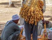 """""""الزراعة"""" تقدم إرشادات لحدائق النخيل لإنتاج ثمار جيدة لزيادة تصدير التمور"""