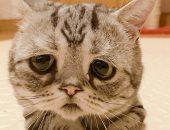 تعرف على قصة القطة الحزينة التى أبكت إنستجرام؟