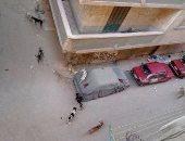 شكوى من انتشار الكلاب الضالة بشارع مسجد الهدى فى البيطاش بالإسكندرية