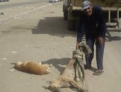 حملة للقضاء على الكلاب الضالة بشوارع الملاحة بالسويس