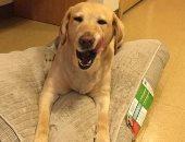 صاحبته الأمريكية اتهمت جارتها بقتله.. النيابة تأمر بعرض كلب على الطب البيطرى