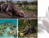 ننشر الصور الفائزة بمسابقة الحياة البرية لعام 2017