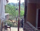 قارئ يحذر: أسلاك الكهرباء تهديد سلامة أهل قريته بمركز أبو حمص فى البحيرة