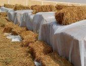 تجار: العراق يطرح مناقصة لشراء ما لا يقل عن 30 ألف طن من الأرز